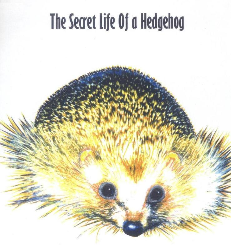 hedgehog paint