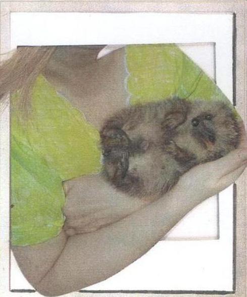 hedgehog-frame2