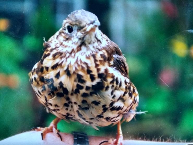 BirdHand4