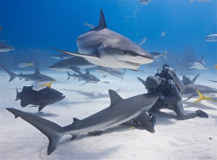 SharkWhispererCristinaZenato2