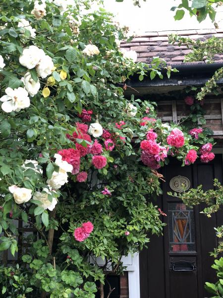 rosesfrontdoor
