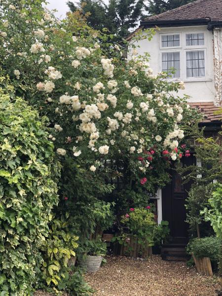whiterosesfrontdoor