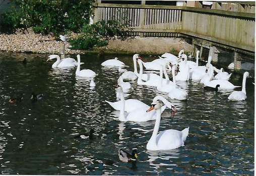 slimbridge2_editeda