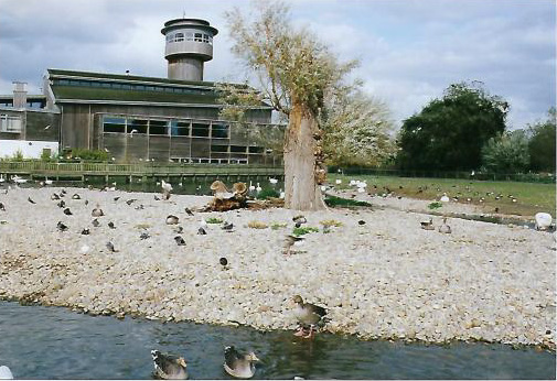 slimbridge5_editedb