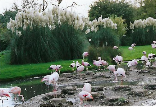 slimbridge7_editeda