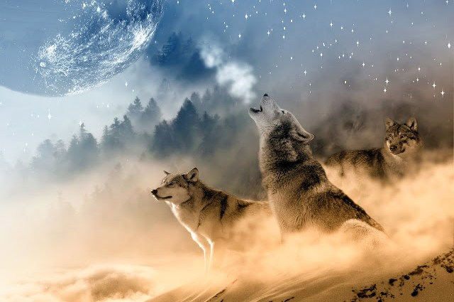 WolfMedicine