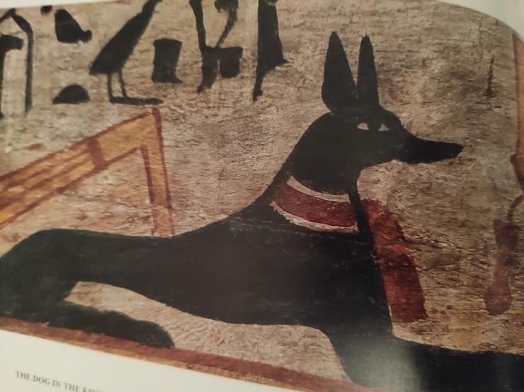 EgyptianDog