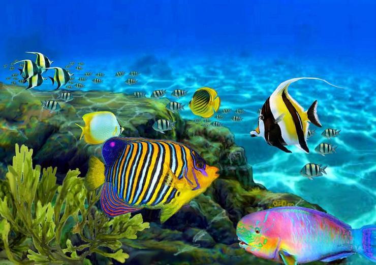 hawaiian-rainbow-fish-stephen-jorgensen