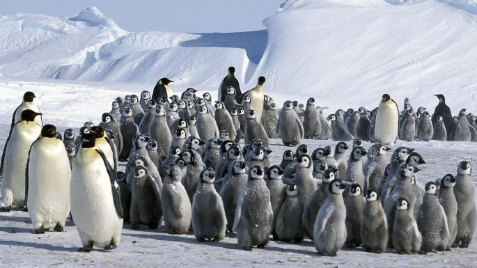 PenguinCrowd