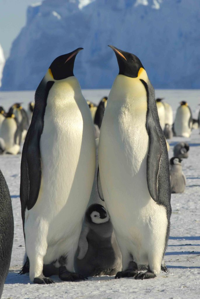 PenguinFamily
