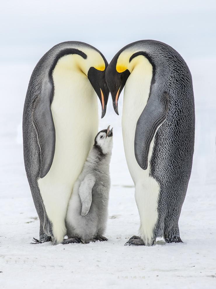 PenguinHeart