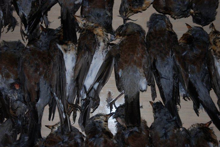 DeadBirdsMarket