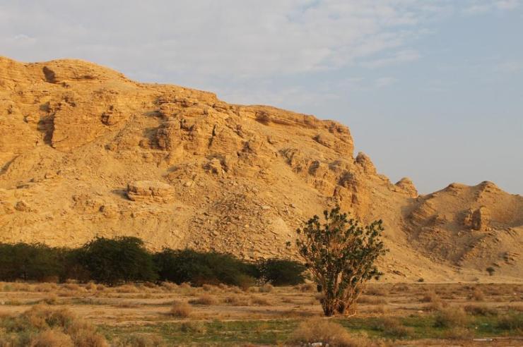ArabianDesert