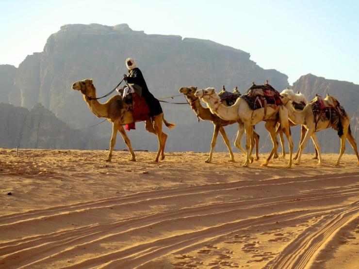 BedouinsCamels