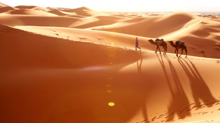 BedouinsCamels2