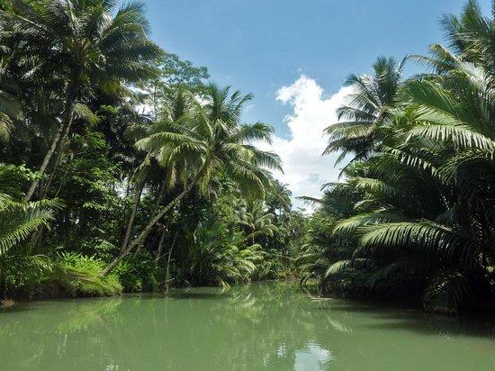 TropicalRiver