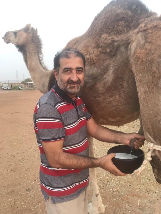 CamelMilk2