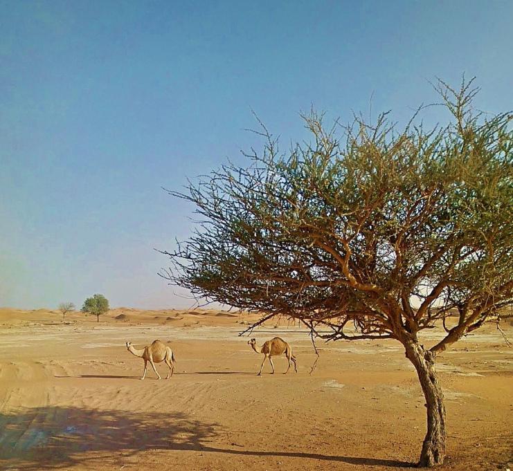 CamelTree